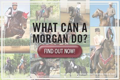 What Can a Morgan Do?