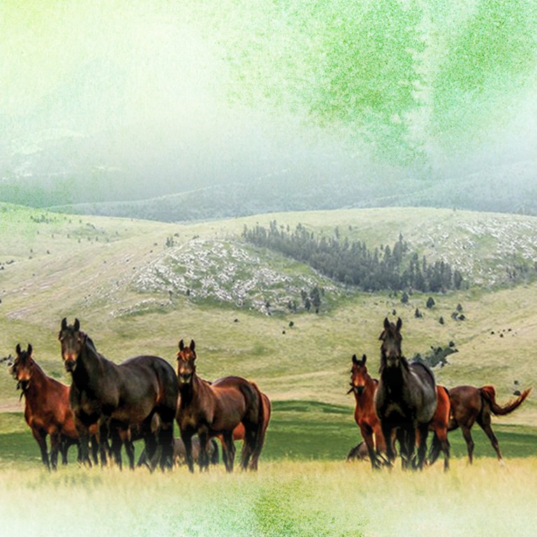 Herd of horses on a ranch