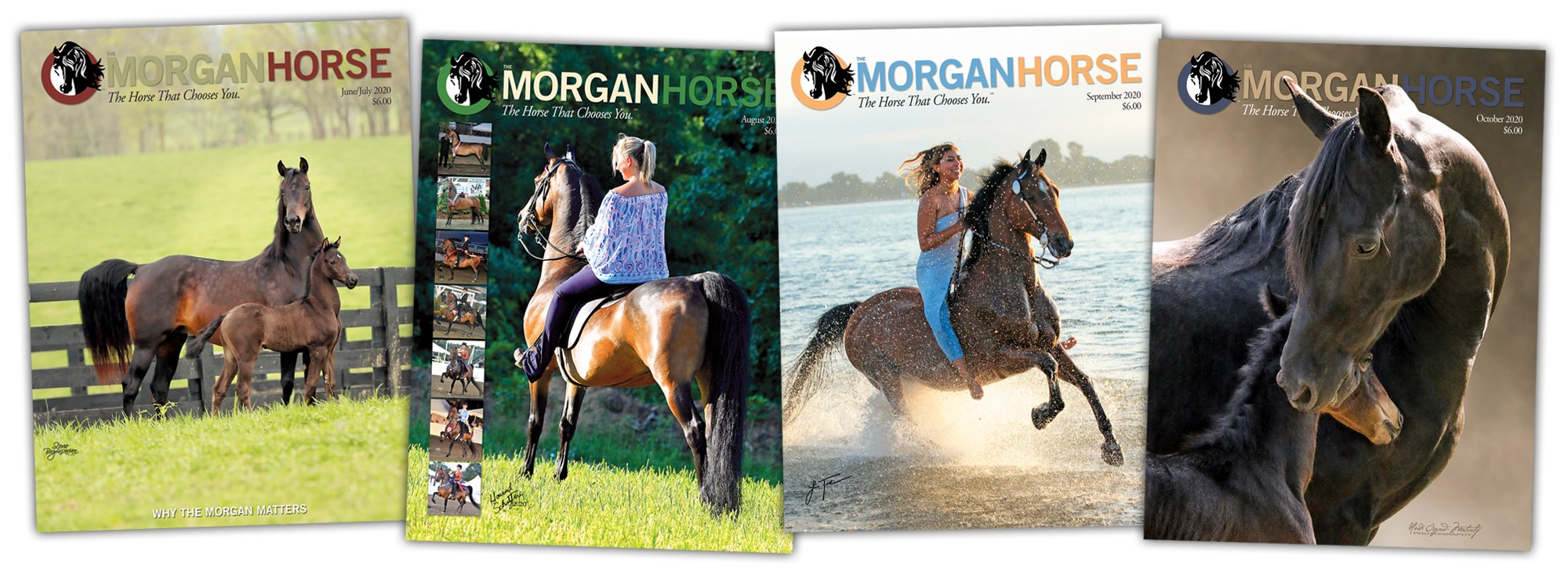 A Selection of Morgan horse magazine covers