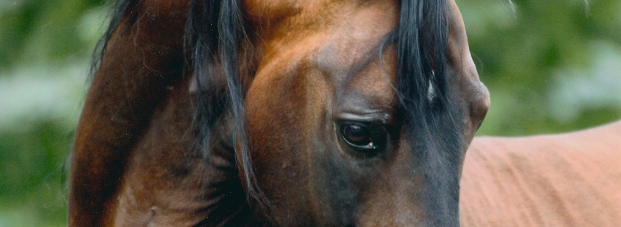 Beautiful Eye of a Stallion