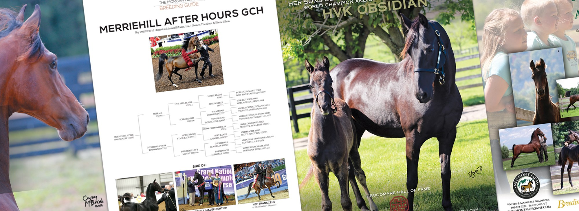 Advertising Sample from The Morgan Horse Magazine