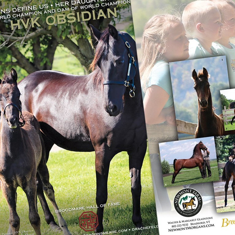Advertisement Sampling from The Morgan Horse Magazine