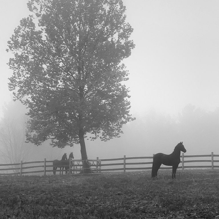 Mare standing on Foggy Field