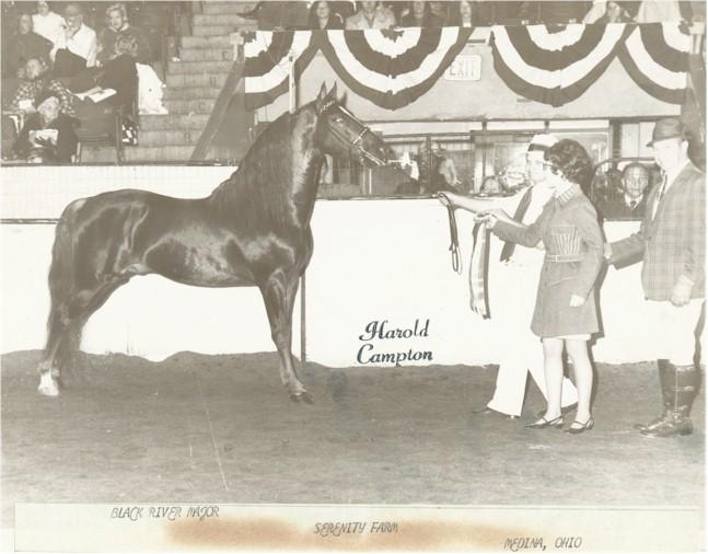 American Morgan Horse Association Morgan Photo Archive