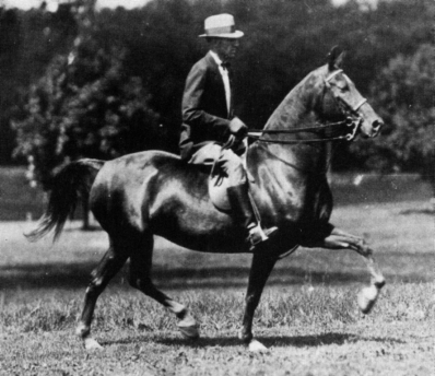 "1939 Eastern Morgan Horse Show. Earl Krantz & Rhyme. ""Rhyme won many saddle classes with Earl Krantz aboard."""