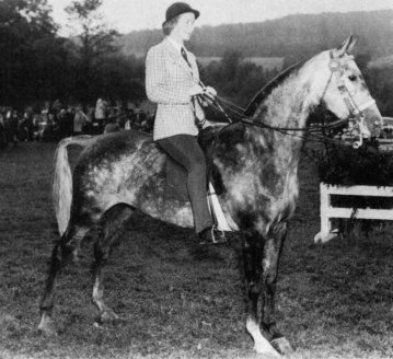 "Jubilee Kay The ""X"" registered Jubilee Kay was owned and shown by Carol Ramsey. Her 1944 filly by Ulendon, Jubilee Queen, bred on."