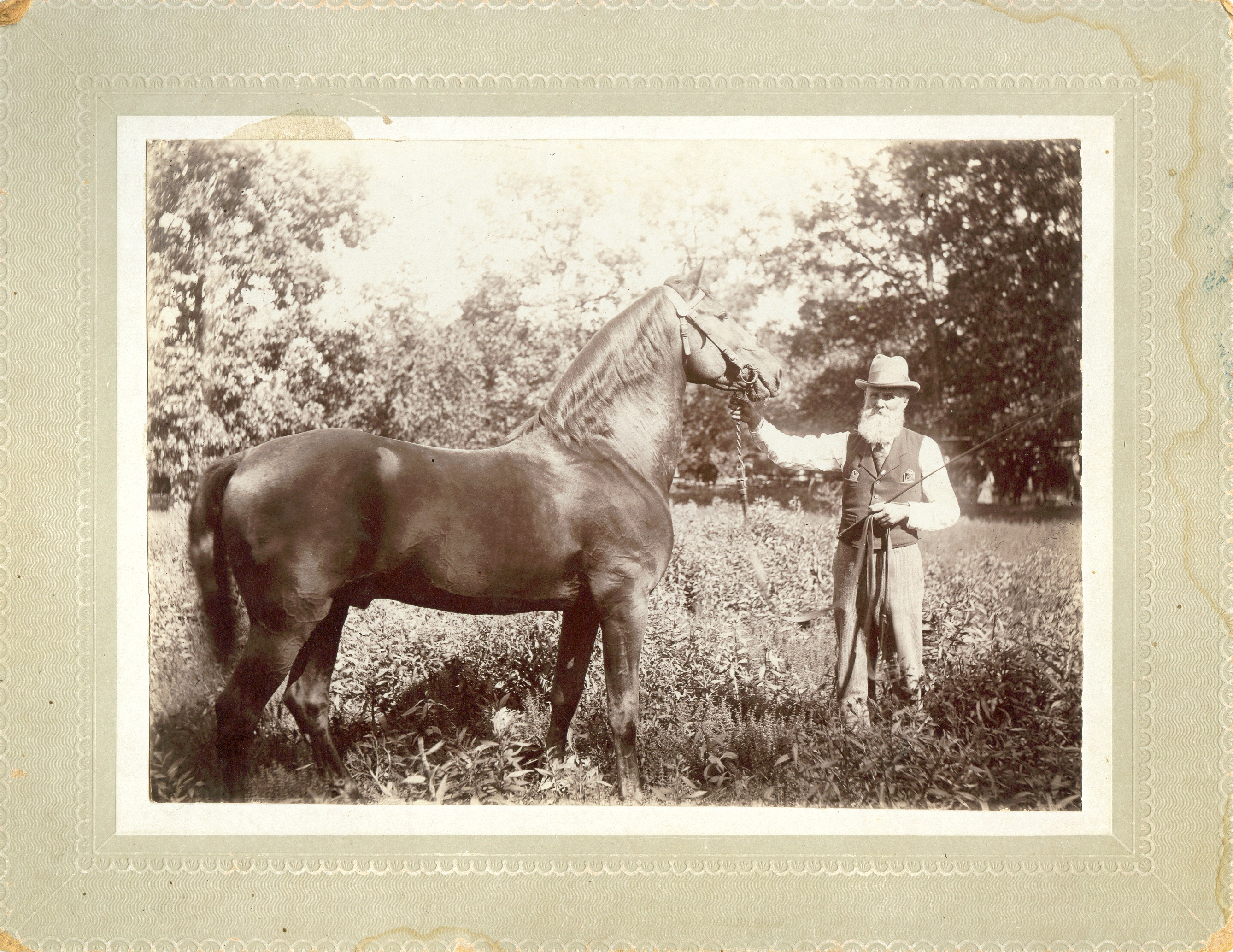 Thomas Jefferson Bennett with Morgan Horse. Picture taken circa 1900 near Adair, IL.